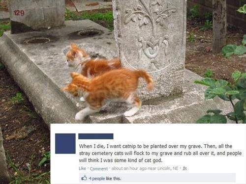 When I die, I want catnip to be planted over my grave. Then , all the stray cemetery cats will flock to my grave and rub all over it, and people will ...