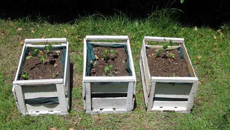 En el siguiente post encontrarás el paso a paso de cómo hacer un huerto en…