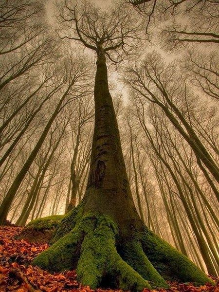 Magnificent Trees around the World !! Part 1 !! -