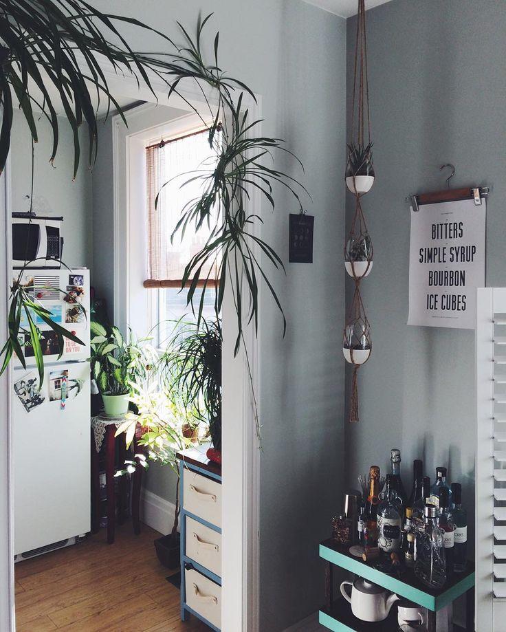 grande plante et plante suspendues