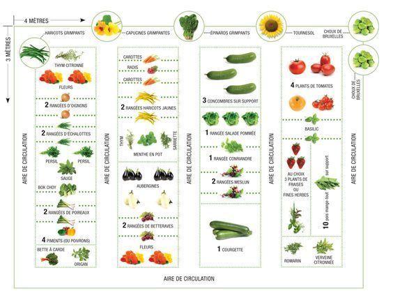 Remark placer vos légumes dans votre potager ?