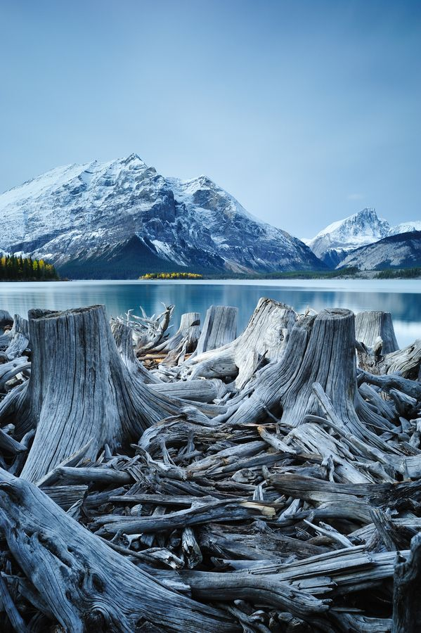 Tree stumps along the shore of the Upper Kananaskis Lake, Alberta, Canada | by Brad Orr, via 500px