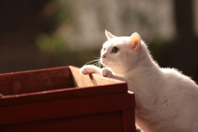「猫侍 いやし猫DVD まるっと玉之丞」撮影時の様子。