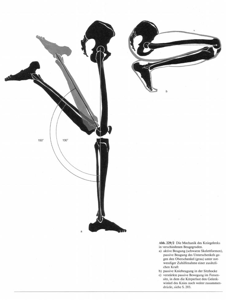 257 best Anatomy Reference images on Pinterest | Anatomy reference ...