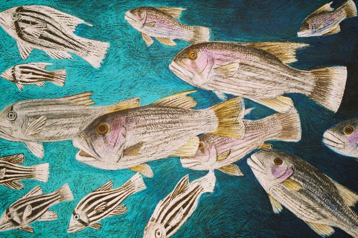 This image is available to share with easy buttons. It is from a series of fish art from Mandy Evans Artists latest microsite made for you to enjoy