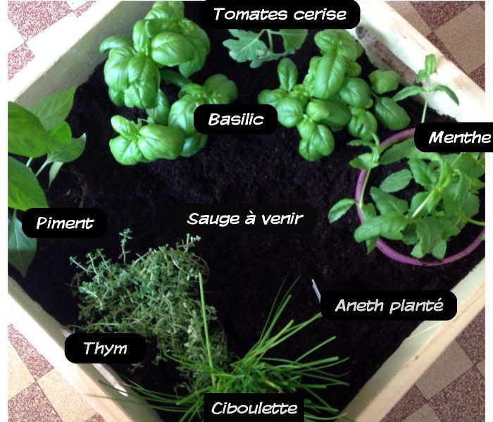 27 best herbes aromatiques images on pinterest herbs herbalism and medicinal plants. Black Bedroom Furniture Sets. Home Design Ideas