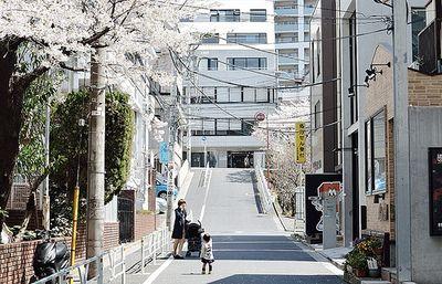 shibuya/sakura