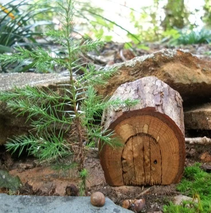 27 Best Images About Tree Stump Ideas On Pinterest