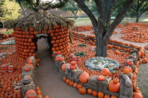 143 best images about dallas arboretum on pinterest - Botanic gardens pumpkin festival ...