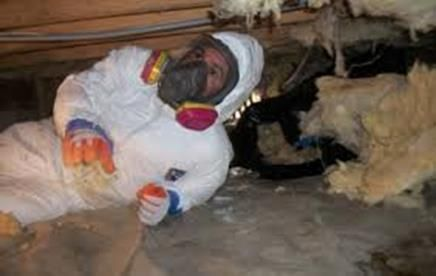 10 Best Mold Removal Mold Remediation Pennsylvania Images
