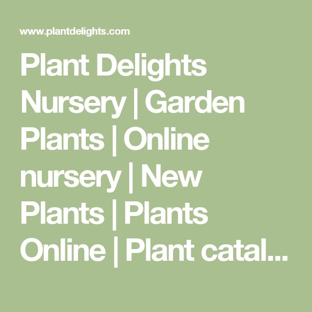 Plant Delights Nursery | Garden Plants | Online nursery | New Plants  | Plants Online | Plant catalog companies | Mail Order Plants | Perennial Plants for sale