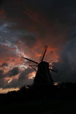 foto van Molendezwaluw Hasselt.