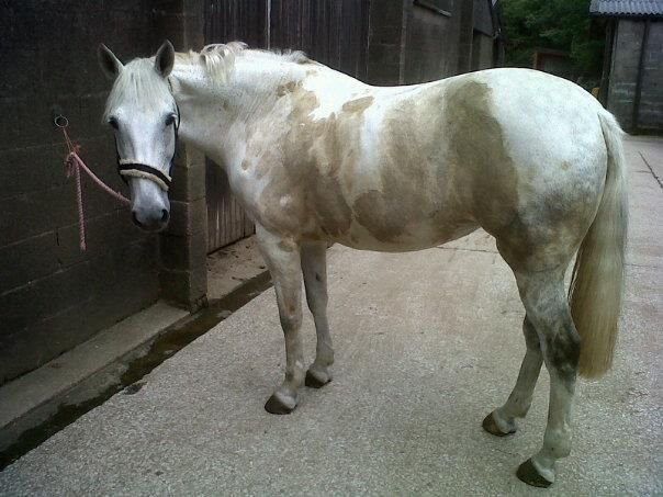 Check out our new blog '50 Shades of Grey Mare'.. #muckymare #50Shades