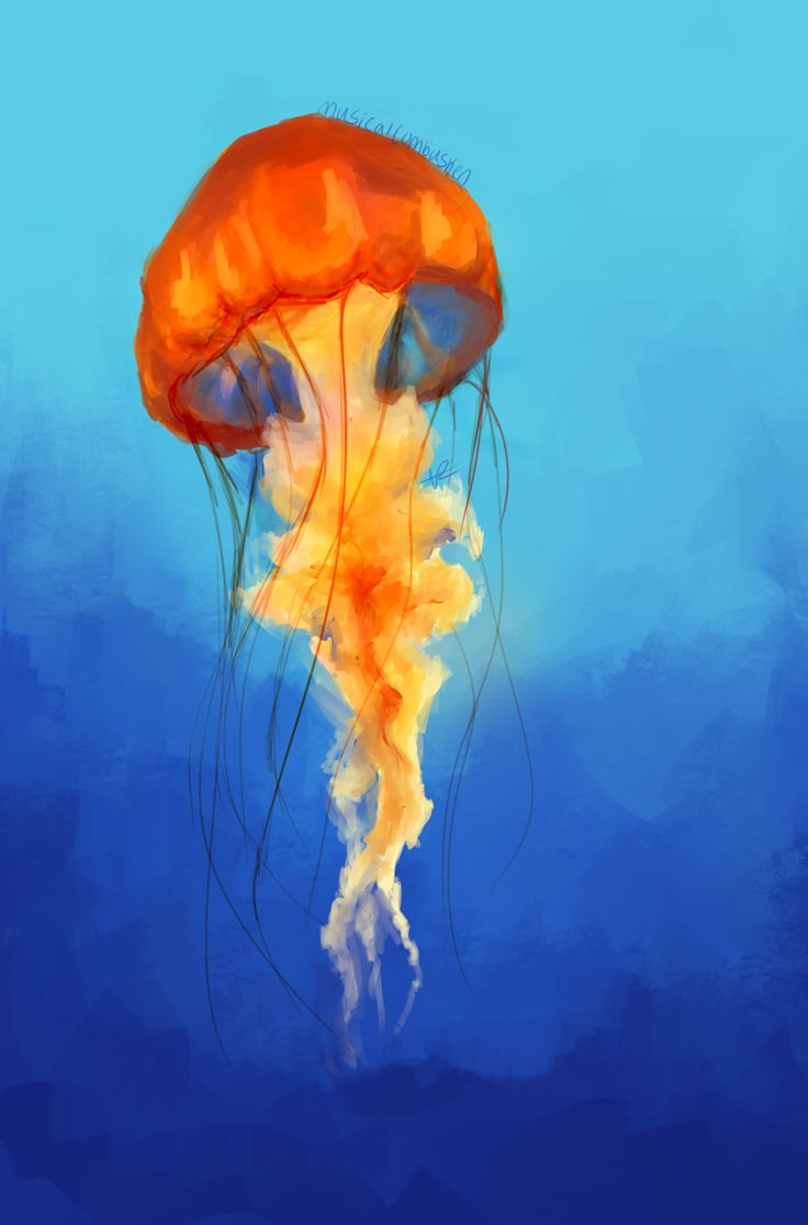 Jellyfish are known for being distinct predators, and at the same time, they don't have a brain like other beings. They are regular organisms which are basic, but you will be quite impressed with their unique looks, that's for sure