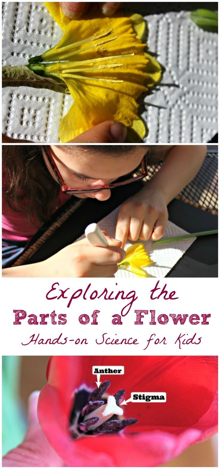 Dissect a flower to learn about all its parts and how pollination works -- awesome hands-on science!
