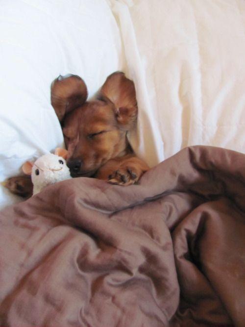 Mimindo um soninho.