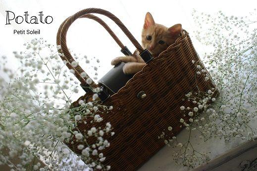 猫 茶トラ ネコ red tabby cat  Kitten