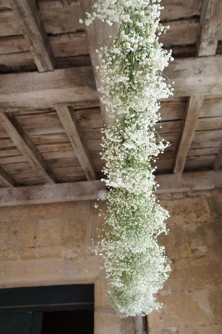 Gypsophila Decoration Naawwww Isnt That Cccuuuttteee
