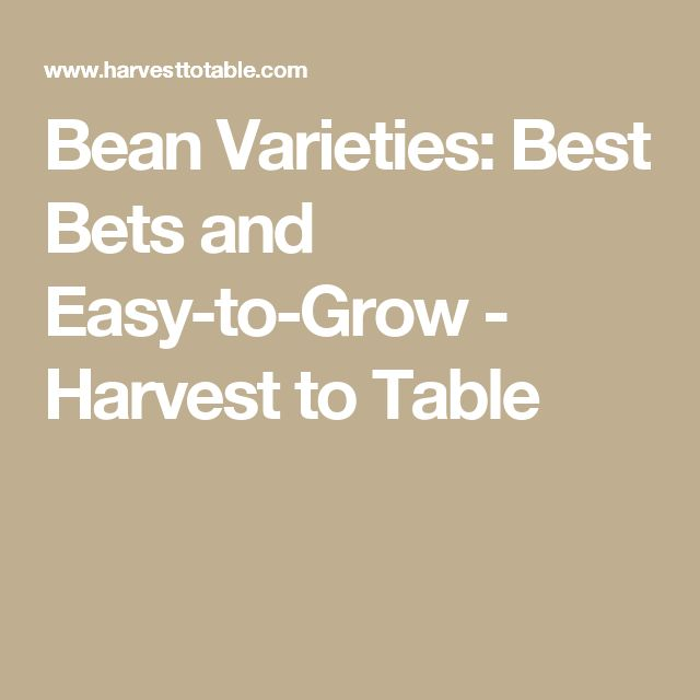 Bean Varieties: Best Bets and Easy-to-Grow - Harvest to Table