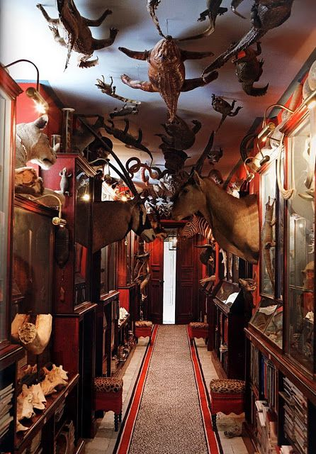 Jacques Garcia :: undisputed master of French Haute Decor :: taxidermy hall at Castle Battlefield