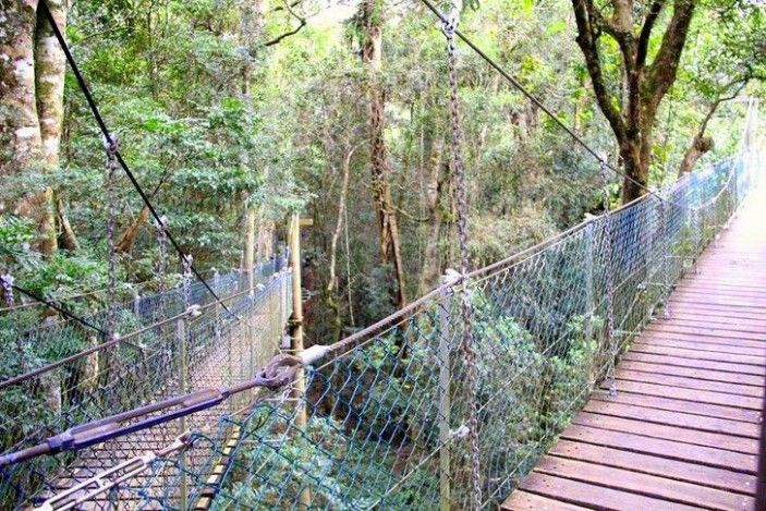 Staying in Lamington National Park