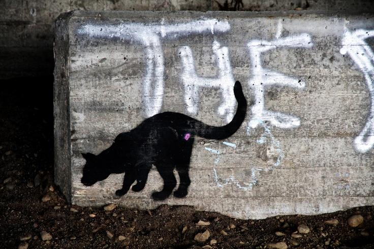 Kissa Yhtiönkadun sillan alla Forssassa.