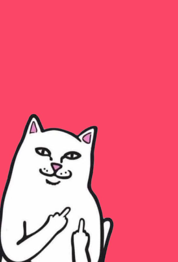 Hd Cat Wallpaper Middle Finger Download Kumpulan Wallpaper