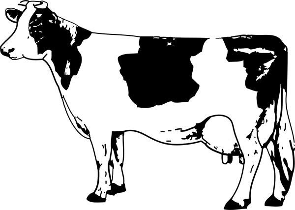 Getting Your First Dairy Cow Tips From 5 Experts Cow Drawing Cow Clipart Cow Art
