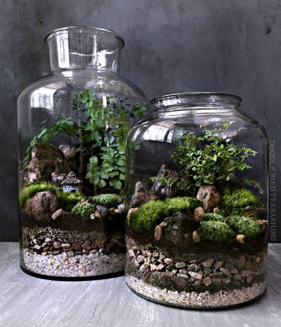 Wasserfall-Terrarium mit Live-Moss-Pflanzen im Hexe-Glasgefäß