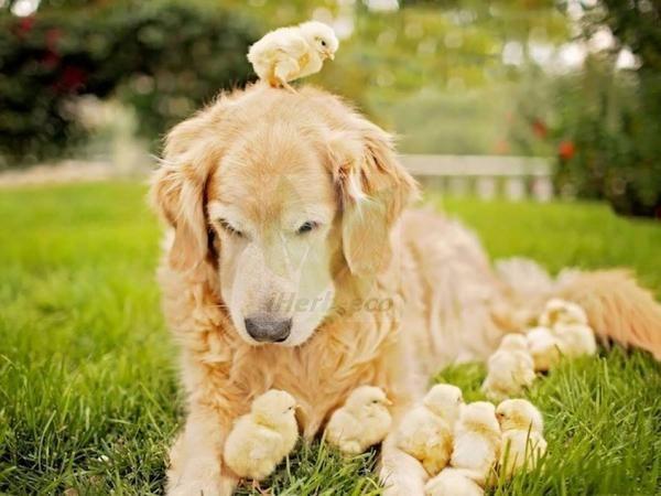 Всё для ухода за вашими домашними любимцами от iHerb  http://ru.iherb.com/pets?rcode=jsj139 Заходите - выбирайте на любой вкус! Для собак, кошек, птиц и даже лошадей Все про iHerb https://vk.com/ecoiherb