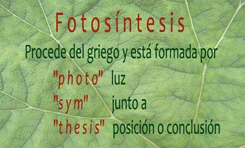 """El proceso fotosintético se conocía como """"asimilación"""" pero este concepto también se usaba para describir el metabolismo anabólico de los animales.Charles Reid Barnes, botánico, propuso dos nuevos términos para designar el proceso de biosíntesis de las plantas verdes en 1893: photosyntax y photosynthesis. Hoy el concepto no es el mismo ya que Barnes lo acuñó para las plantas pero sabemos que no son las únicas que realizan fotosíntesis."""