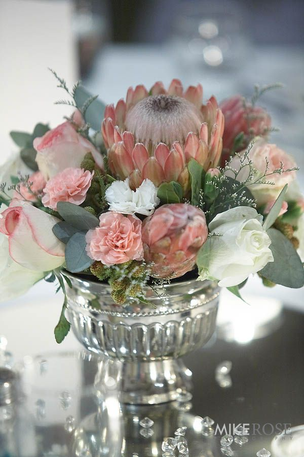 Pink Susara protea in a silver roman urn