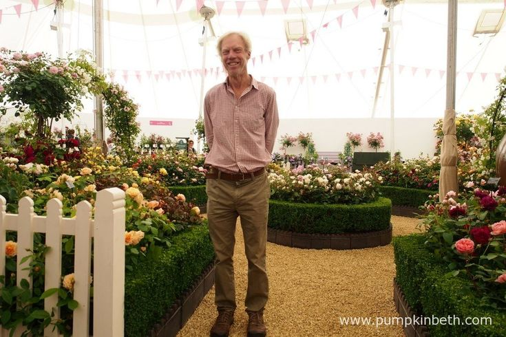 Michael Marriott, a Rosarian and the Technical Manager of David Austin Roses, pictured in the lovely David Austin rose garden, inside The Festival of Roses Marquee, at the RHS Hampton Court Palace Flower Show 2016.
