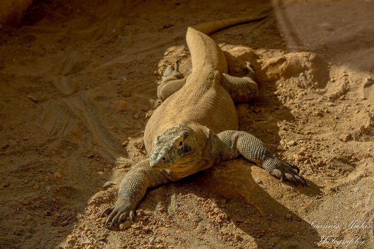 Αττικό Ζωολογικό Πάρκο: Όταν η πανδαισία του ζωικού βασιλείου προσφέρει απλόχερα μοναδικές εμπειρίες ζωής..!! - Προπαγάνδα