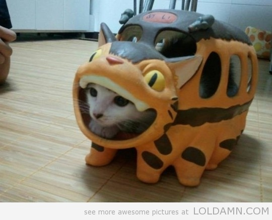 Cat bus costume. No idea how they managed that one ...