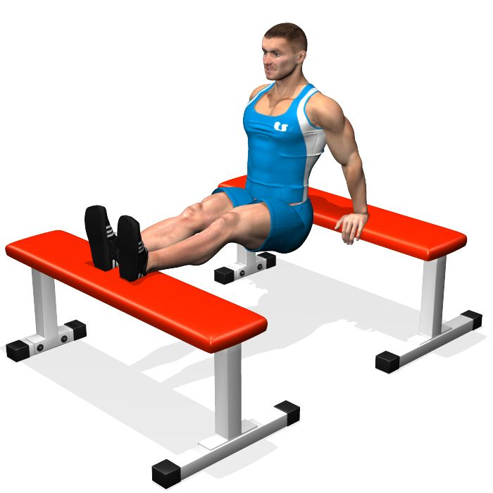 BENCH DIPS INVOLVED MUSCLES DURING THE TRAINING TRICEPS