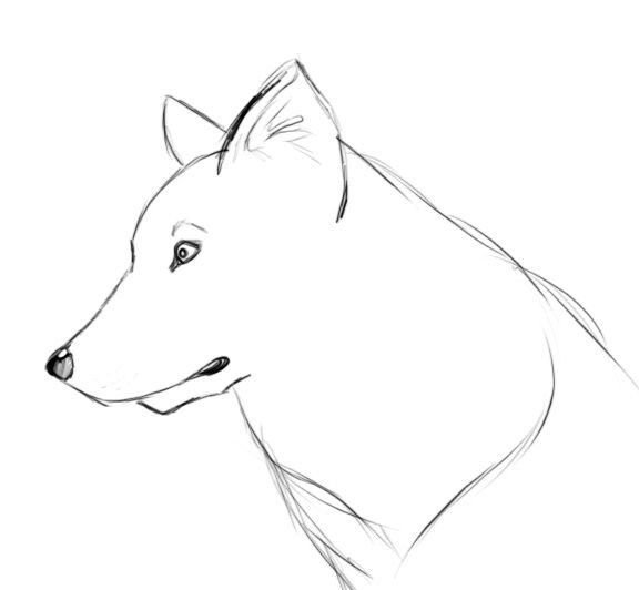 Comment dessiner un loup facile dessins pinterest - Modele dessin chat facile ...