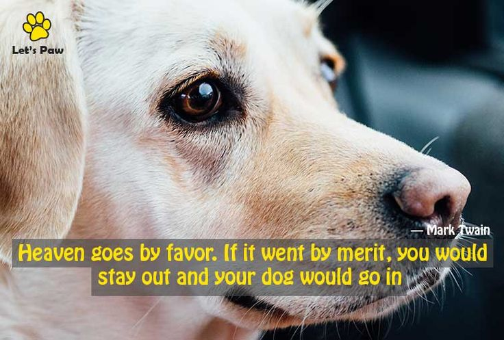 Heaven goes by favor. If it went by merit, you would stay out and your dog would go in. —Mark Twain