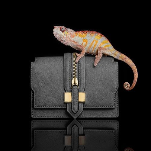 Grey handbag with chameleon reptile creative still life photography. Handbag, clutch bag, fashion accessory. Luxury goods still life photographer, Josh Caudwell. For commercial, advertising, product and editorial. London, New York, Paris, Milan.
