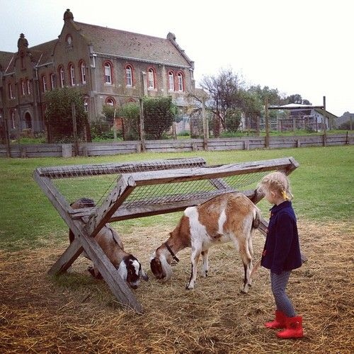 The Collingwood Childrens Farm is right in the middle of a part of the Capital City Trail along the Yarra River.  A great place to ride to or park and ride and end with a stroll around the farm with kids or eat at the cafe.  Just 4kms from the centre of Melbourne.