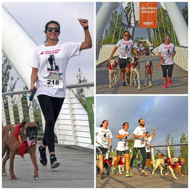 ¡La5ª CAN-RRERAsolidaria de #BIOPARC #Valencia será el 1 de octubre y ya está abierto el plazo de inscripción en la web de #BioparcValencia!Carrera benéfica en la que se participa con #perro para celebrar el Día Mundial del Animal + info link en BIO 📷 #CanrreraValencia | #5CanrreraValencia #running #runners #carrerasolidaria #perros #correrconperro #instadogs #DiaMundialDelAnimal #ExperienciasBioparc #igersValencia #igersBioparc #PhotoCollage #igersComunitat