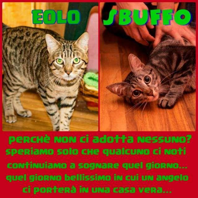 Regalo - adozione gatti tigrati europei