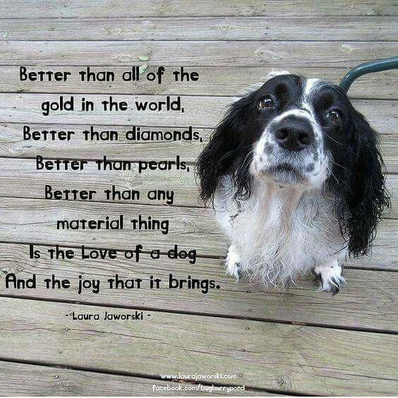 Truth. If I were a millionaire but couldn't have a dog, I'd give up my millions.