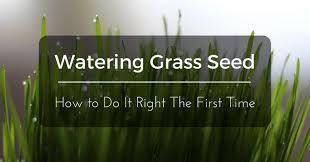 Image result for best sprinkler for grass seed