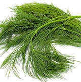 dill weed recipes seeds herb receipts food cooking