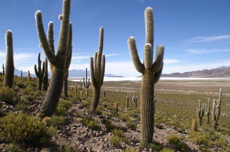 Ancovinto. Este hermoso paisaje es Ancovinto, ubicado en el Altiplano a unos 3.800 m.s.n.m en comuna de Colchane, Provincia del Tamarugal. Su suelo se destina al cultivo de la quínoa, papas, habas y hortalizas. Te invitamos a Iquique y a disfrutar de estas bellas postales.