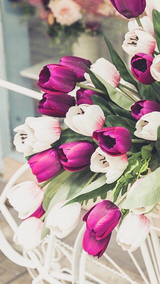 Wallpaper iPhone beautiful tulips ⚪️