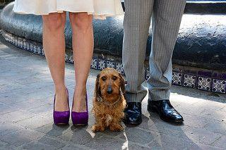 Dog wedding attire pets in weddings pet weddings dog wedding clothes