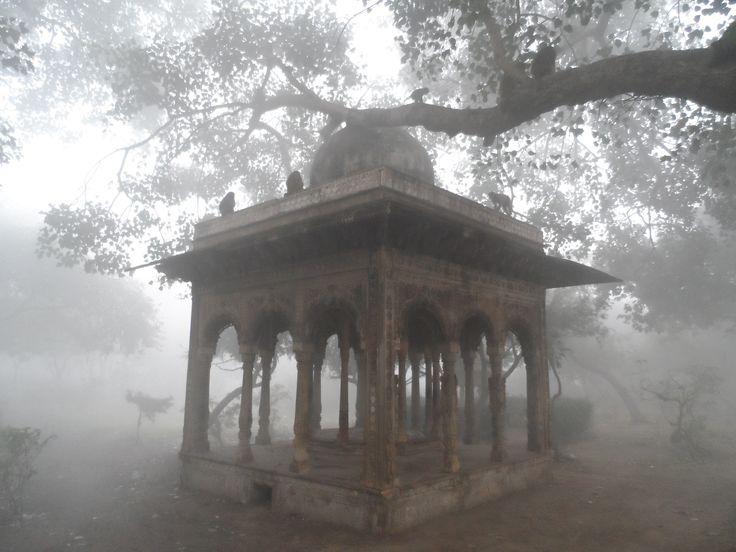 Monkey temple in Agra