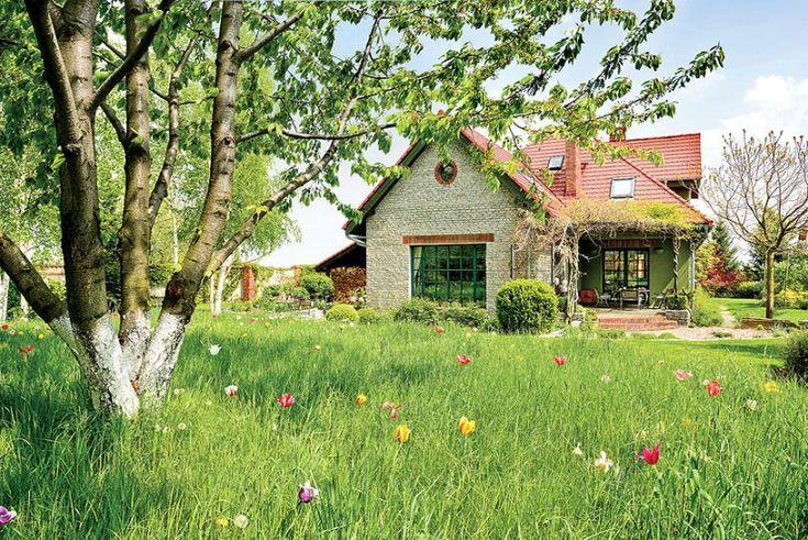 Dzika łąka przed domem Fot. Mariusz Purta #łąka #kwiaty #polska #dom #ogród #naturalny #natura #zieleń #kwiatki #pole #polne #wiosna #lato